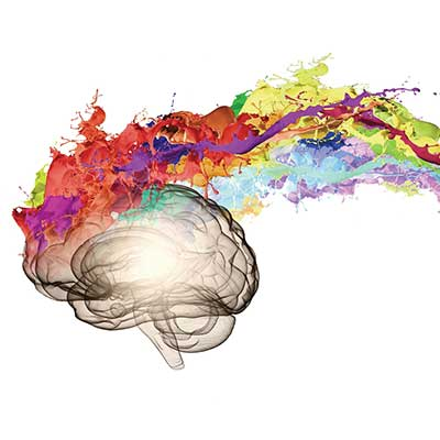 Brain with colours