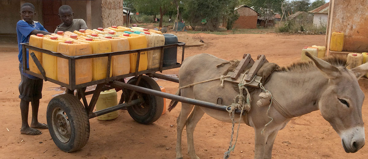 Anthropology - donkey pulling water supplies